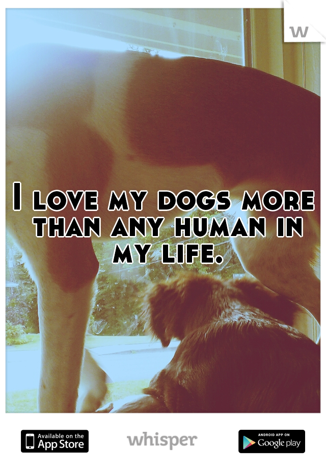 I love my dogs more than any human in my life.
