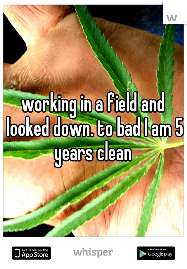 working in a field and looked down. to bad I am 5 years clean
