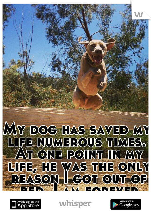 My dog has saved my life numerous times.  At one point in my life, he was the only reason I got out of bed. I am forever thankful for him.
