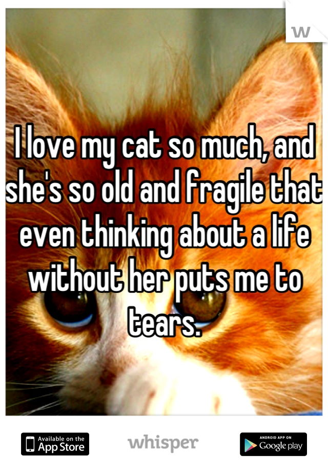 I love my cat so much, and she's so old and fragile that even thinking about a life without her puts me to tears.
