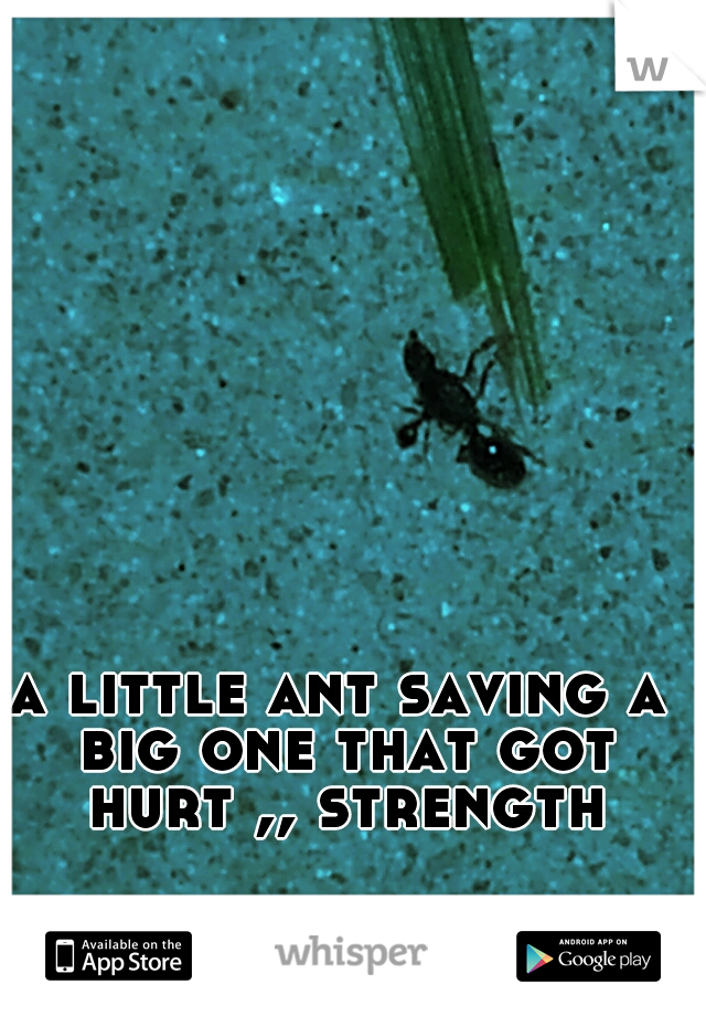 a little ant saving a big one that got hurt ,, strength
