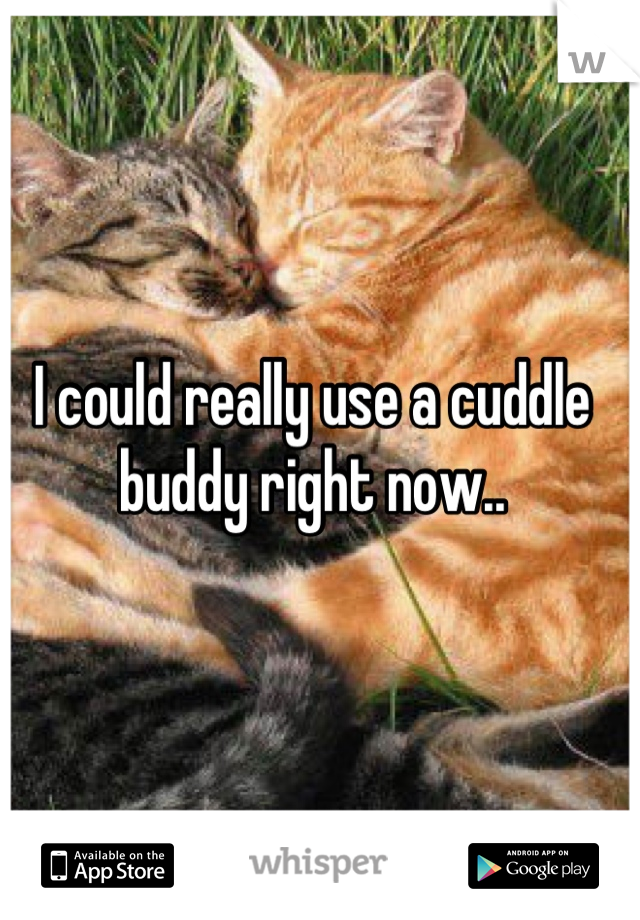 I could really use a cuddle buddy right now..