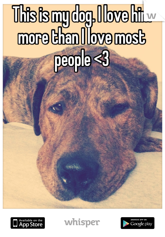 This is my dog. I love him more than I love most people <3