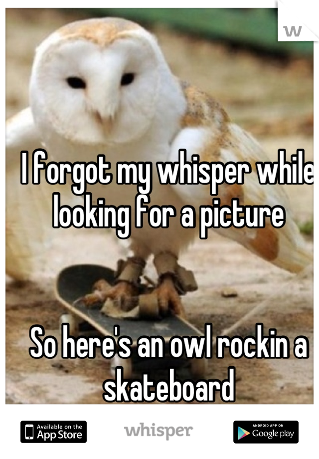 I forgot my whisper while looking for a picture   So here's an owl rockin a skateboard