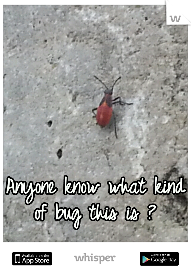 Anyone know what kind of bug this is ?