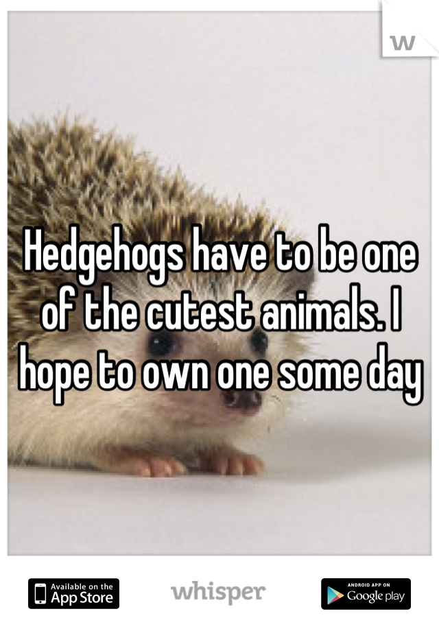 Hedgehogs have to be one of the cutest animals. I hope to own one some day