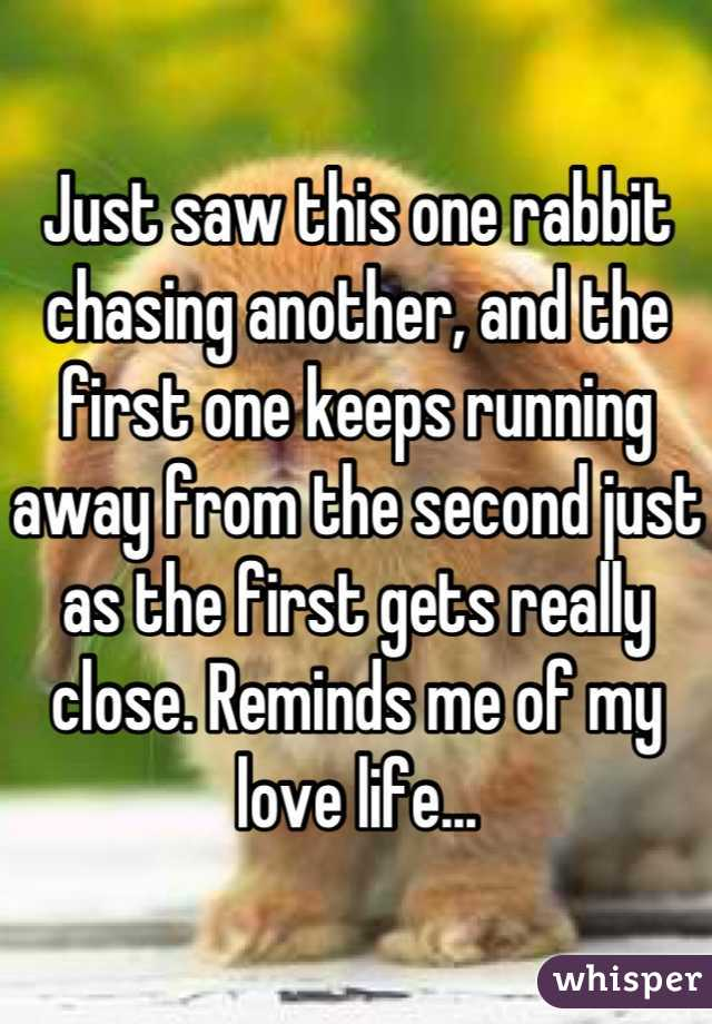 Just saw this one rabbit chasing another, and the first one keeps running away from the second just as the first gets really close. Reminds me of my love life...
