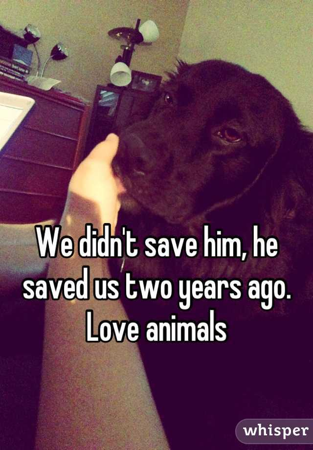 We didn't save him, he saved us two years ago. Love animals
