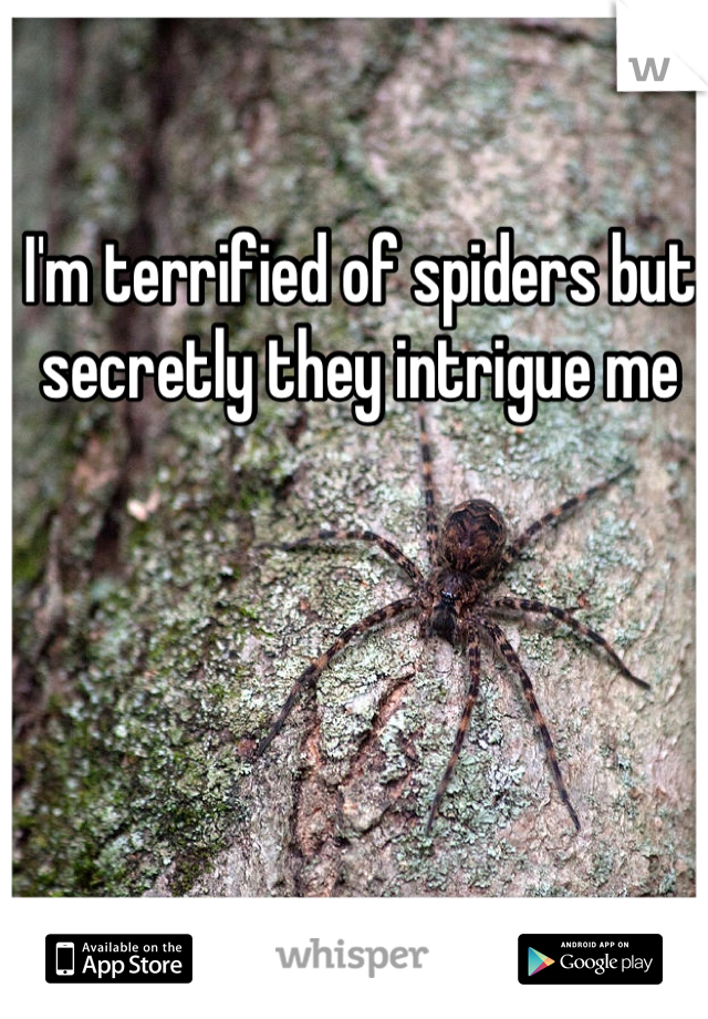 I'm terrified of spiders but secretly they intrigue me