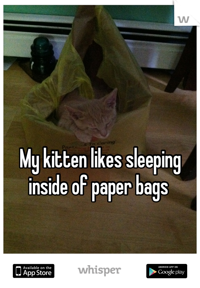My kitten likes sleeping inside of paper bags