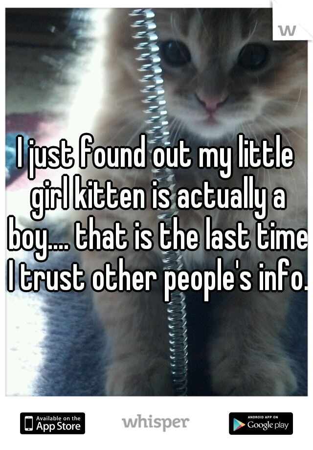 I just found out my little girl kitten is actually a boy.... that is the last time I trust other people's info.