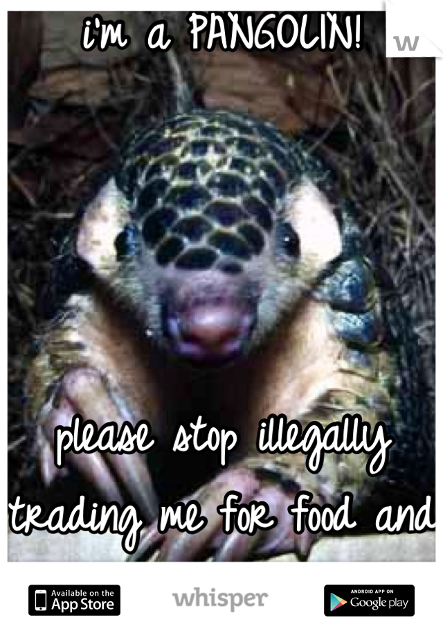 i'm a PANGOLIN!     please stop illegally trading me for food and fake medicine!