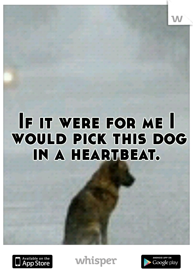 If it were for me I would pick this dog in a heartbeat.