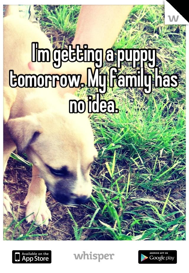 I'm getting a puppy tomorrow. My family has no idea.