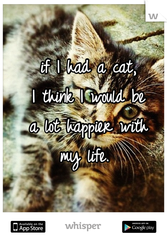 if I had a cat,  I think I would be a lot happier with my life.