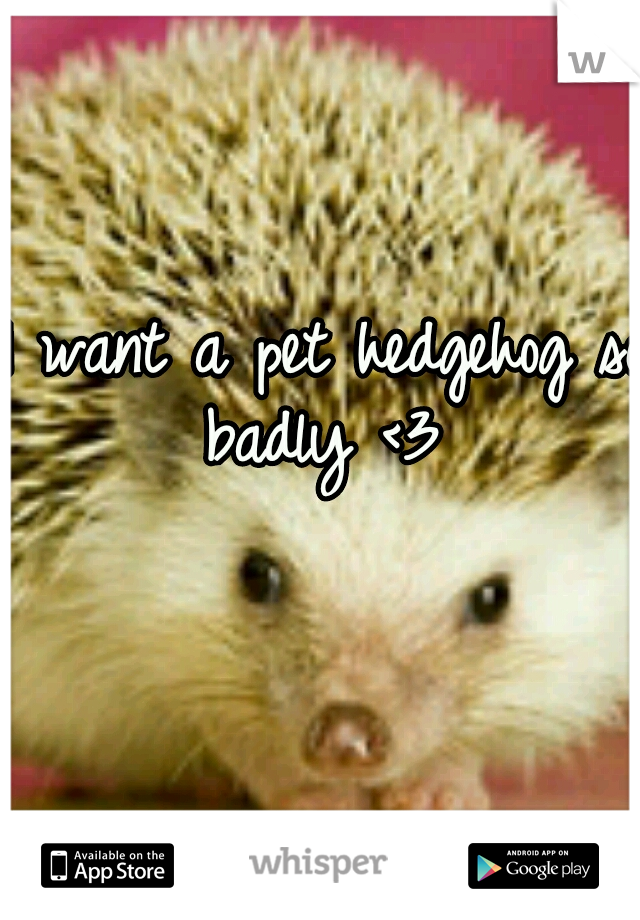 I want a pet hedgehog so badly <3