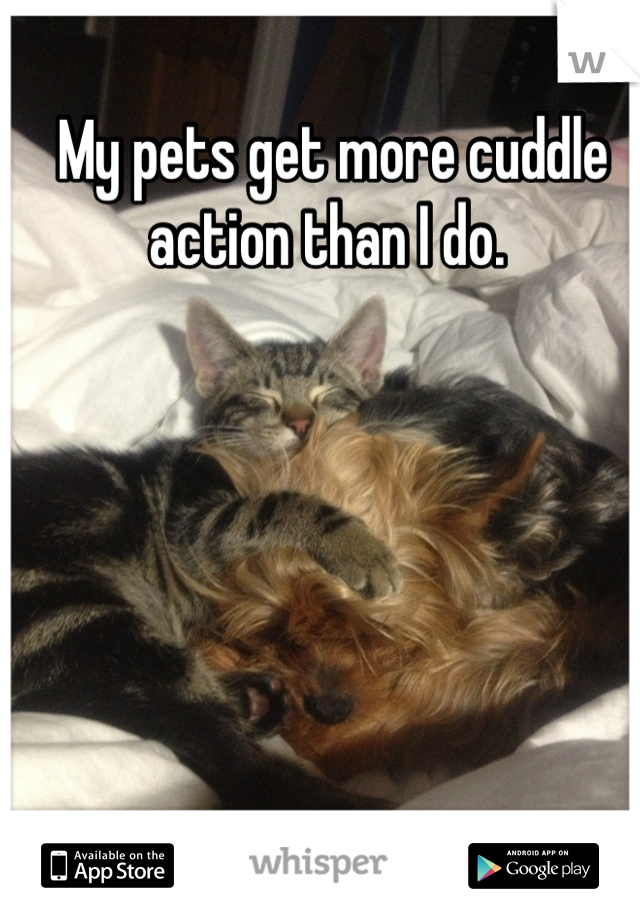 My pets get more cuddle action than I do.