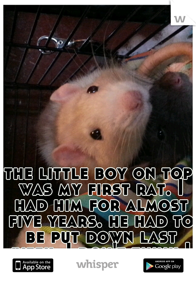 the little boy on top was my first rat. I had him for almost five years. he had to be put down last week. I don't think I will ever be ok.