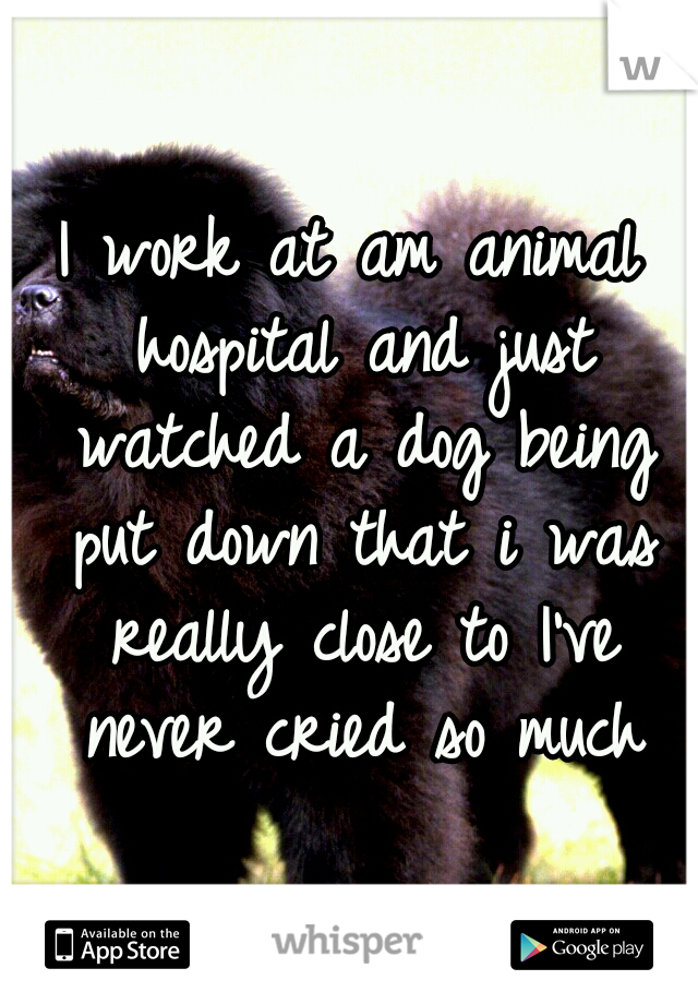 I work at am animal hospital and just watched a dog being put down that i was really close to I've never cried so much