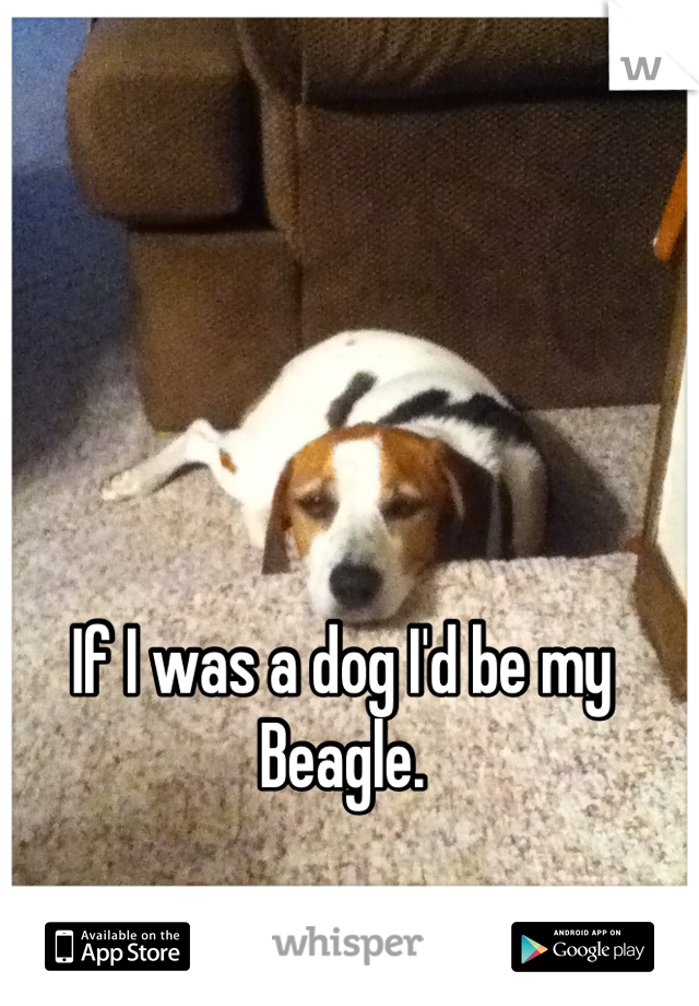 If I was a dog I'd be my Beagle.
