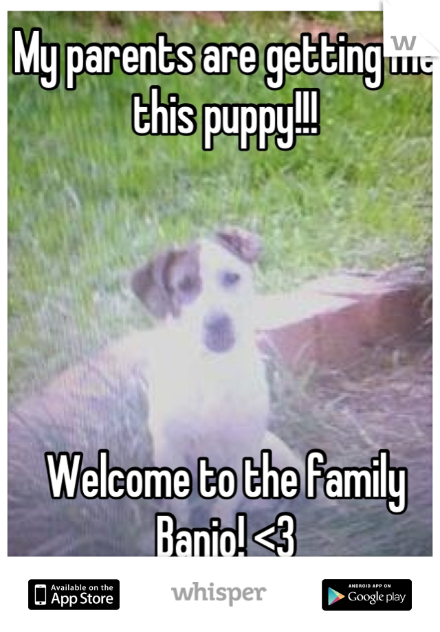 My parents are getting me this puppy!!!       Welcome to the family Banjo! <3
