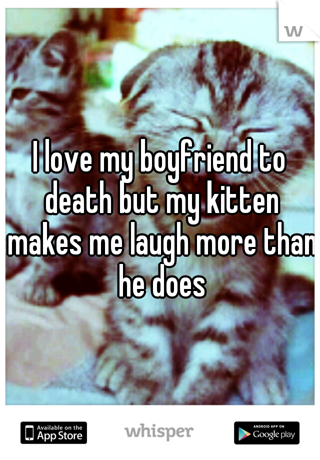 I love my boyfriend to death but my kitten makes me laugh more than he does