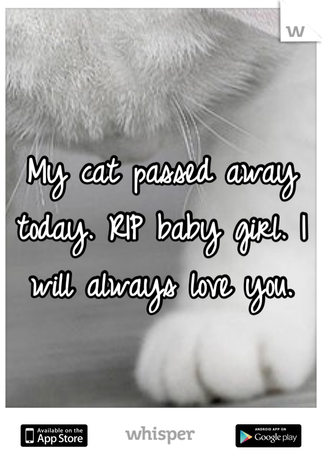 My cat passed away today. RIP baby girl. I will always love you.