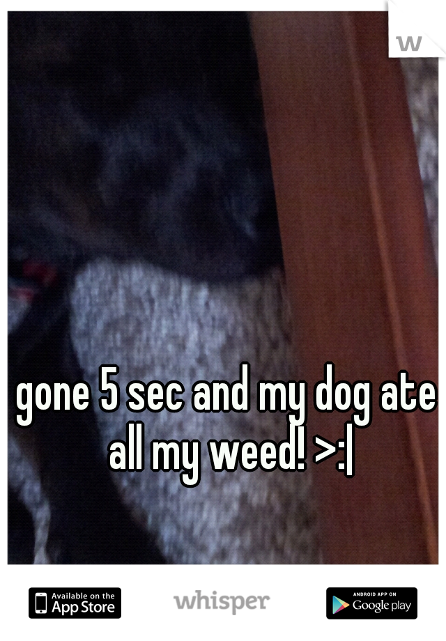 gone 5 sec and my dog ate all my weed! >: 