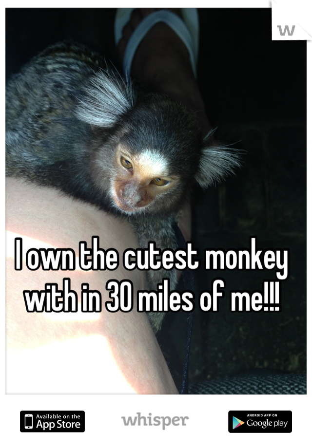 I own the cutest monkey with in 30 miles of me!!!