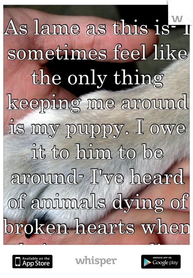 As lame as this is- I sometimes feel like the only thing keeping me around is my puppy. I owe it to him to be around- I've heard of animals dying of broken hearts when their masters die.