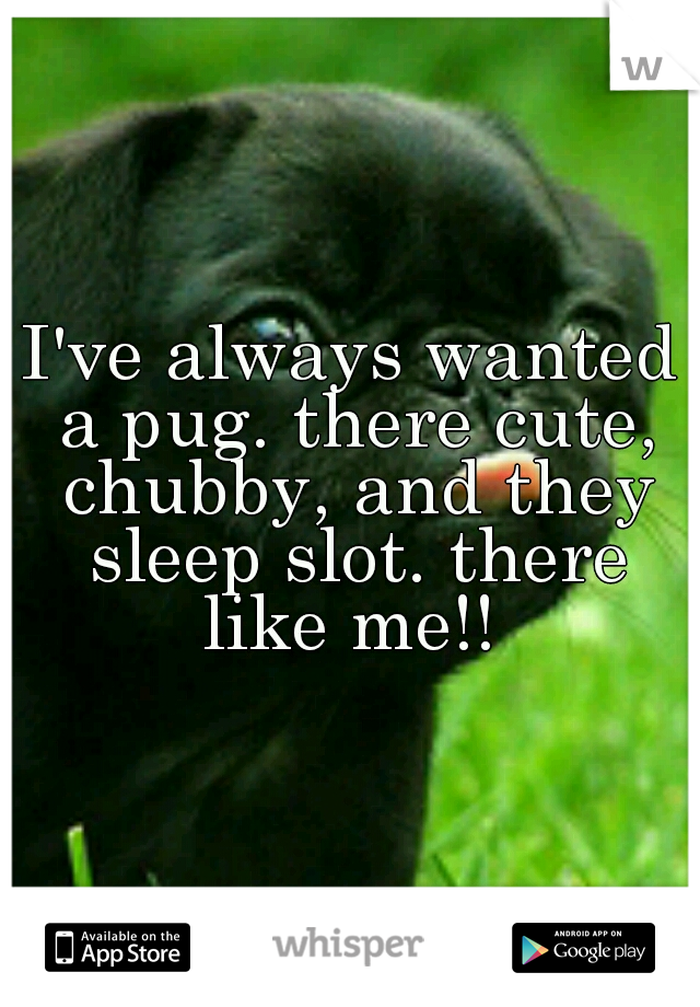 I've always wanted a pug. there cute, chubby, and they sleep slot. there like me!!