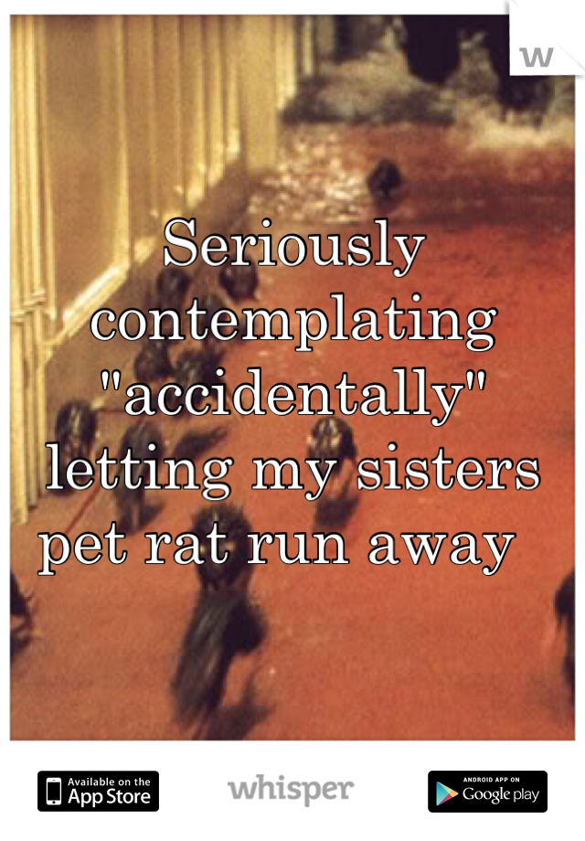 """Seriously contemplating """"accidentally"""" letting my sisters pet rat run away"""