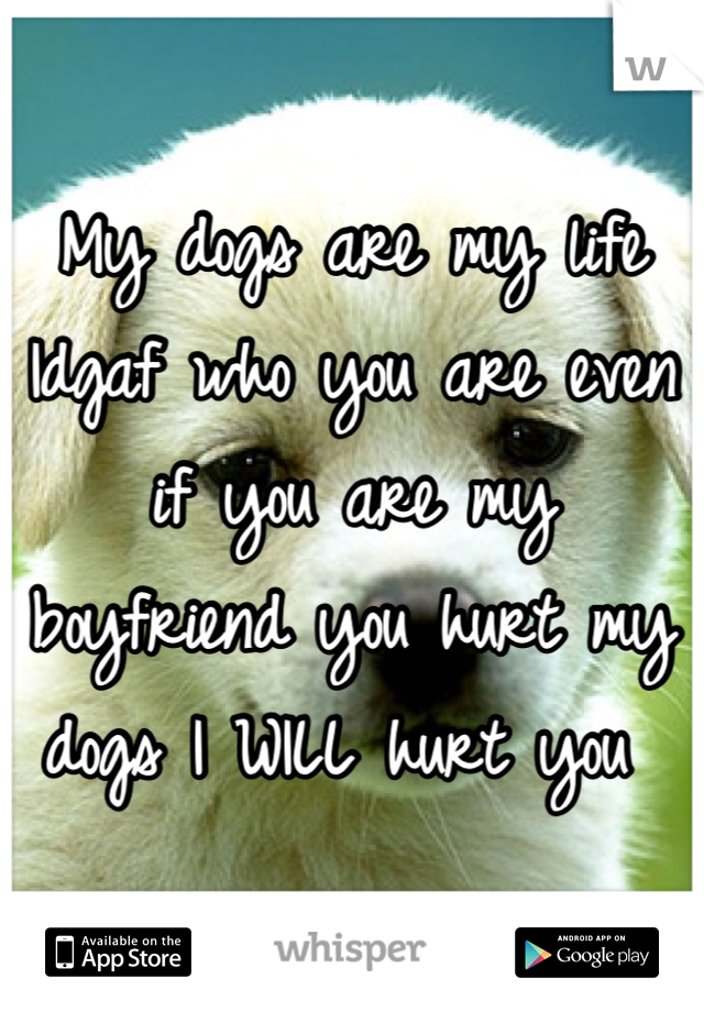 My dogs are my life  Idgaf who you are even if you are my boyfriend you hurt my dogs I WILL hurt you