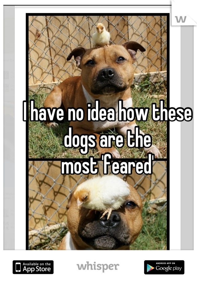 I have no idea how these dogs are the  most 'feared'