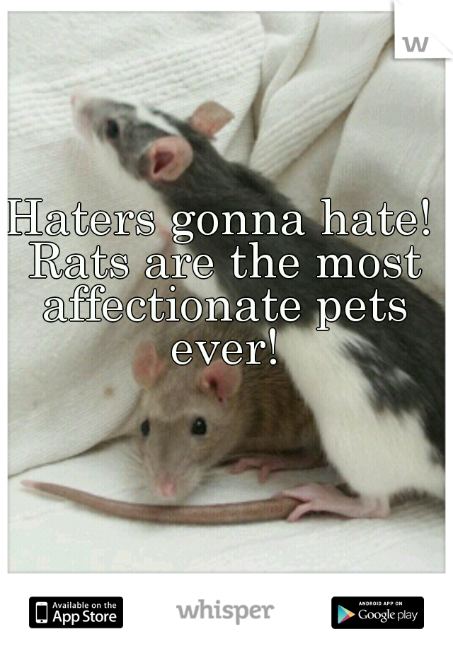 Haters gonna hate! Rats are the most affectionate pets ever!
