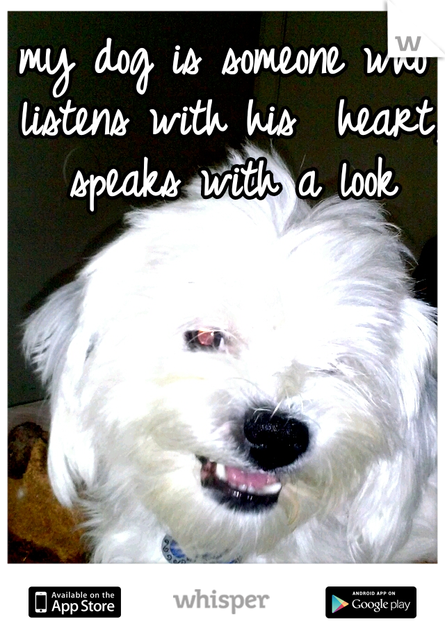 my dog is someone who listens with his  heart, speaks with a look