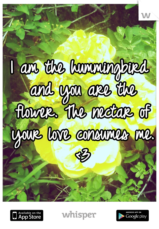 I am the hummingbird and you are the flower. The nectar of your love consumes me. <3