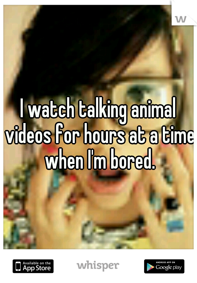 I watch talking animal videos for hours at a time when I'm bored.
