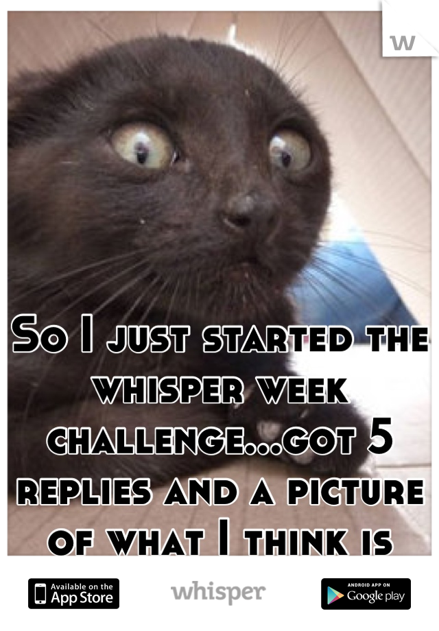 So I just started the whisper week challenge...got 5 replies and a picture of what I think is someone's butt.