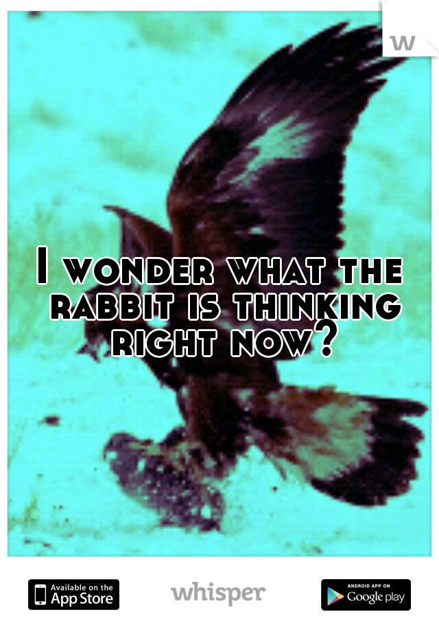 I wonder what the rabbit is thinking right now?