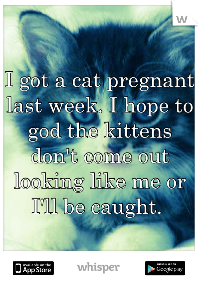 I got a cat pregnant last week. I hope to god the kittens don't come out looking like me or I'll be caught.
