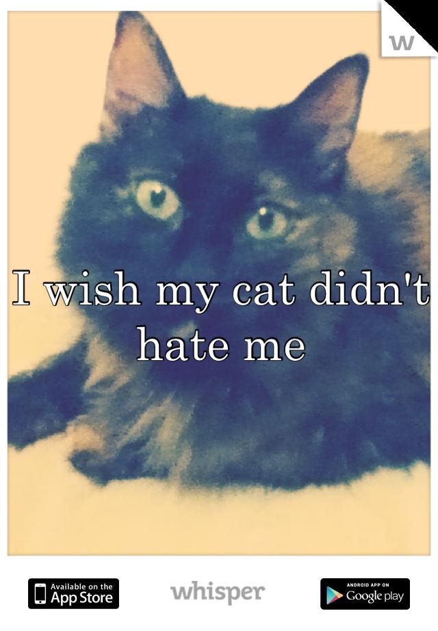 I wish my cat didn't hate me