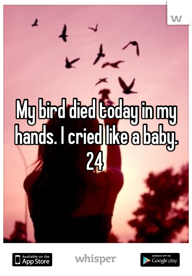 My bird died today in my hands. I cried like a baby.  24
