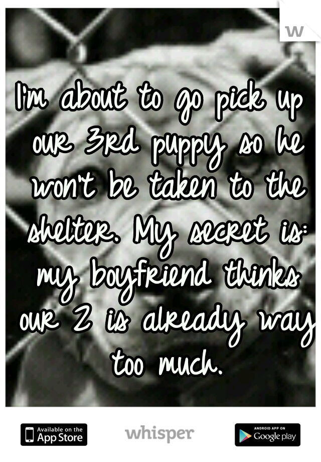 I'm about to go pick up our 3rd puppy so he won't be taken to the shelter. My secret is: my boyfriend thinks our 2 is already way too much.