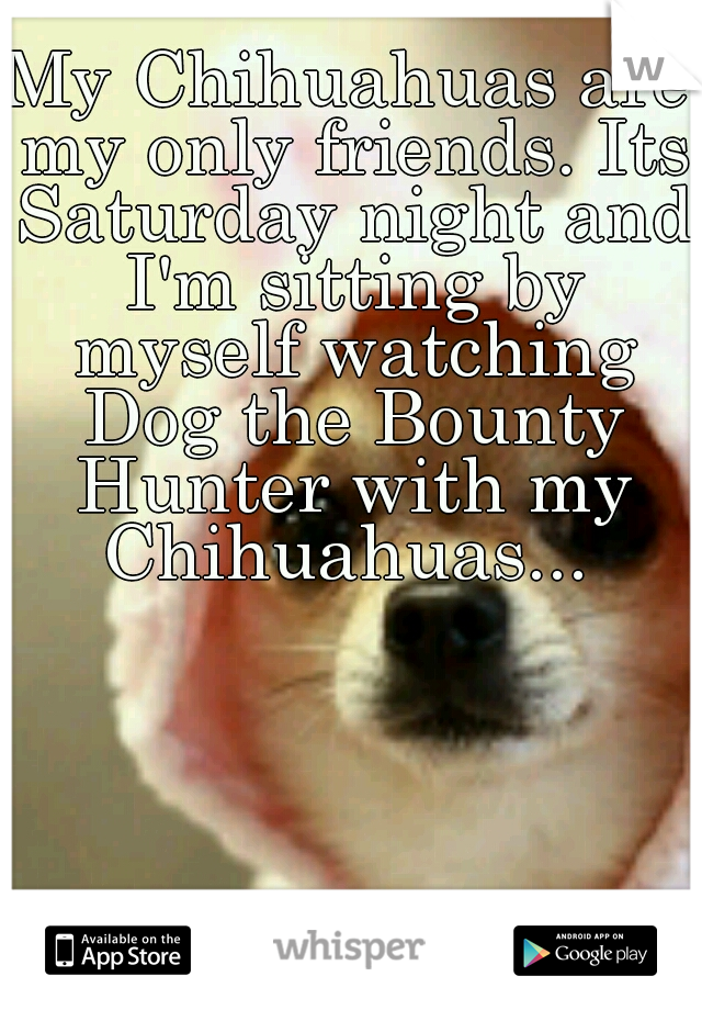 My Chihuahuas are my only friends. Its Saturday night and I'm sitting by myself watching Dog the Bounty Hunter with my Chihuahuas...