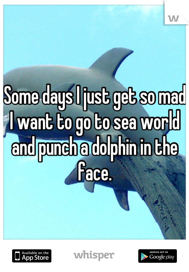Some days I just get so mad I want to go to sea world and punch a dolphin in the face.