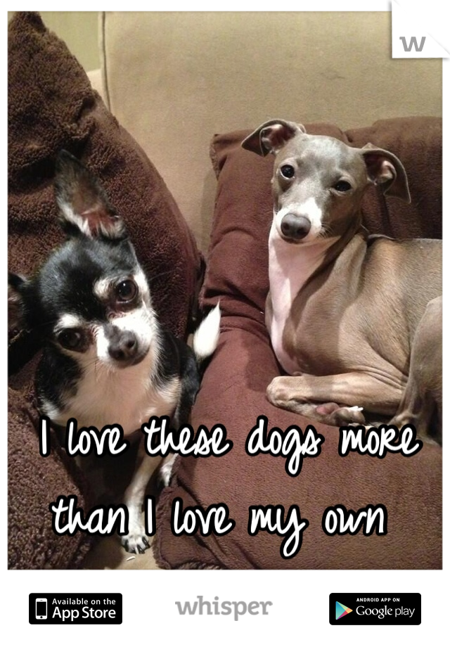 I love these dogs more than I love my own