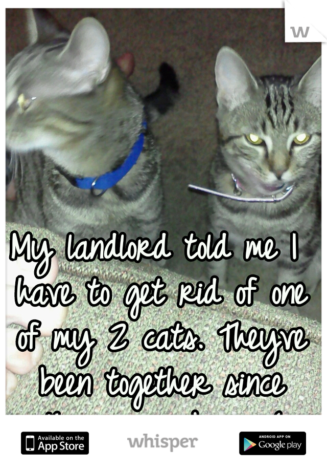 My landlord told me I have to get rid of one of my 2 cats. Theyve been together since they were born :(
