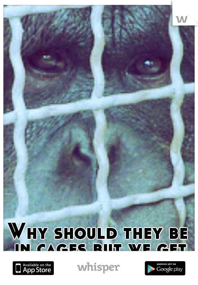 Why should they be in cages but we get to run wild?