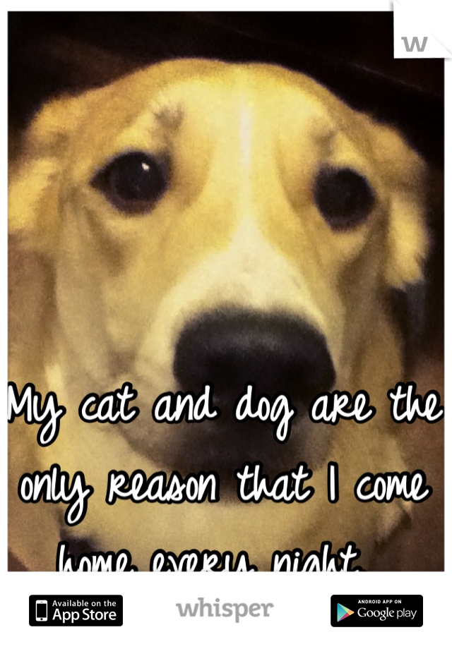 My cat and dog are the only reason that I come home every night.